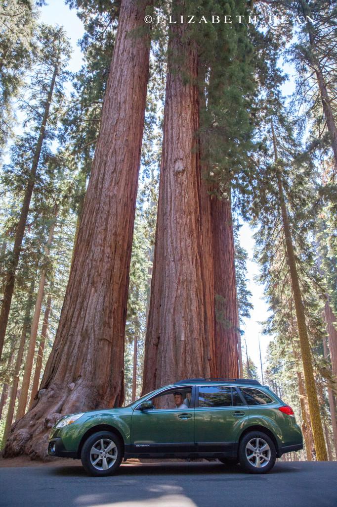 070214 Sequoia 35