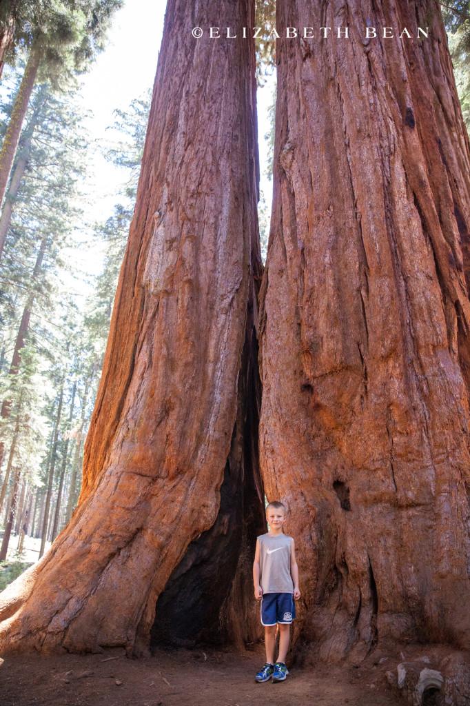 070214 Sequoia 37