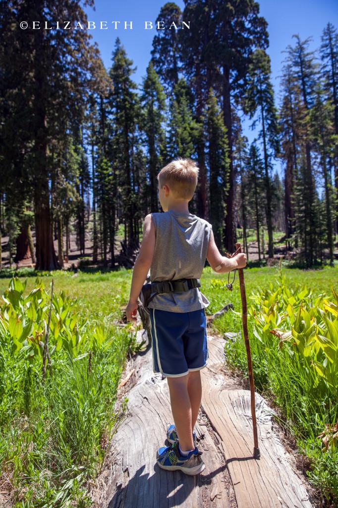 070214 Sequoia 46