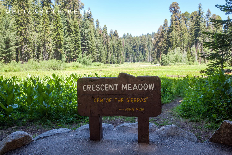 070214 Sequoia 61