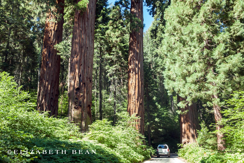 070314 Sequoia 01