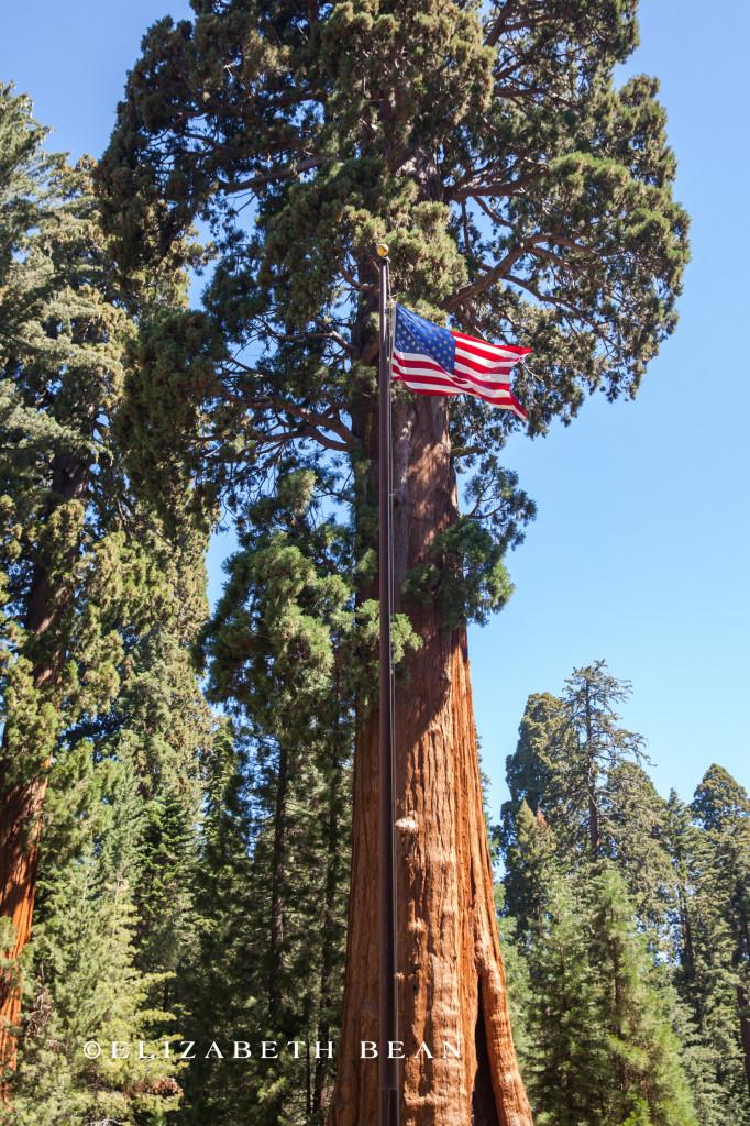 070314 Sequoia 03