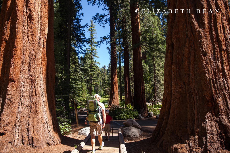 070314 Sequoia 08