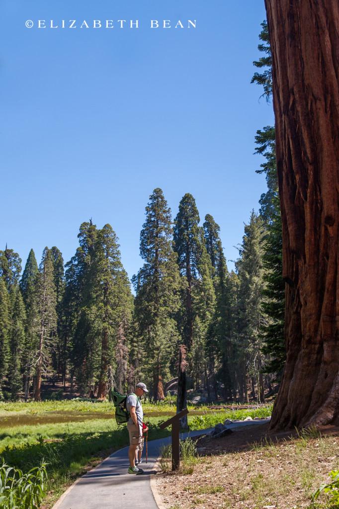 070314 Sequoia 15