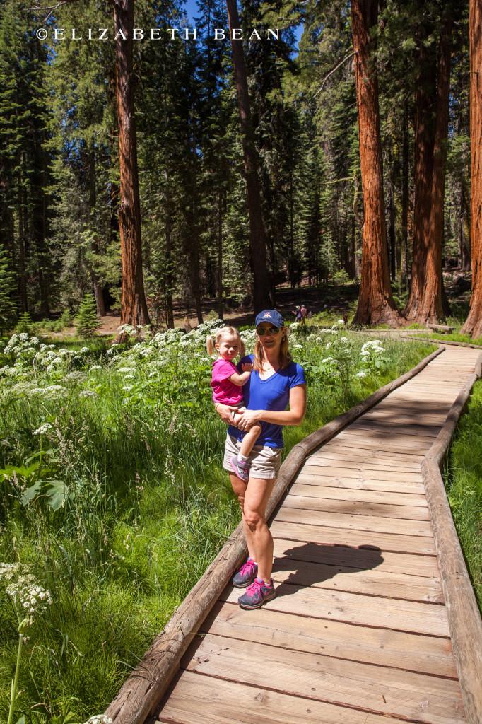 070314 Sequoia 29