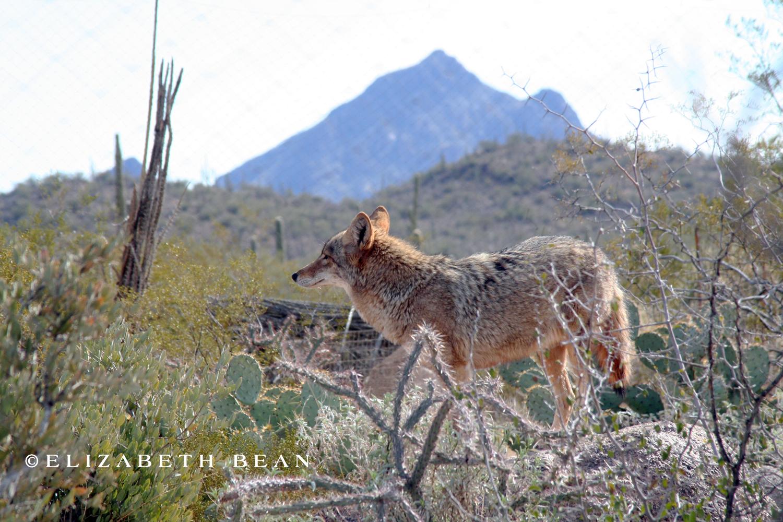012807 Tucson 19