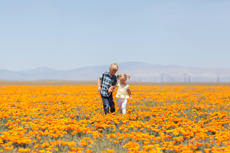 Antelope Valley Poppy Fields :: Lancaster, California